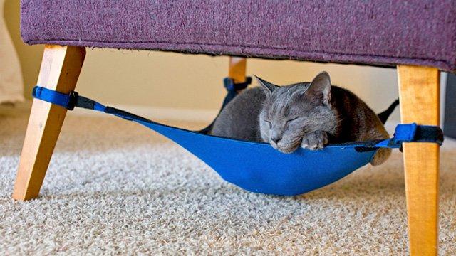 Eine Hängematte für Katzen: Damit Ihr Liebling wie ein König schlafen kann
