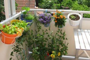 10 Dingen die Sie unbedingt wissen müssen um einen Biogemüsegarten anzubauen