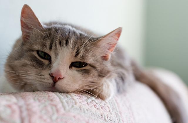 Einfach und schnell die Katzenhaare zu entfernen