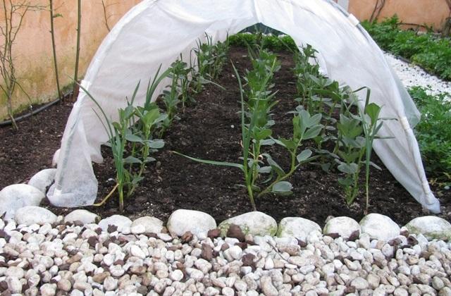 Fünf Tipps, um im Herbst und im Winter das Gemüse zu schützen