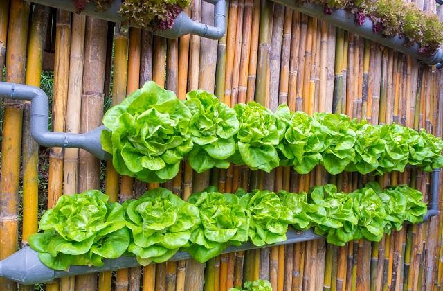 Ein Gemüsegarten für das Haus, auch mit wenig Platz