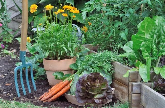 Gemüsegarten im April: Was man anbauen und was man ernten kann