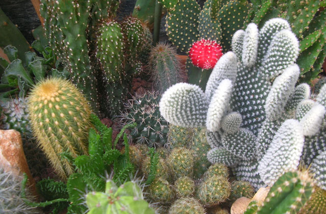 Einen schönen Garten aus Fettpflanzen