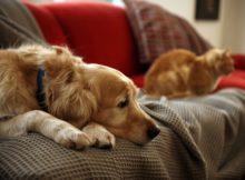 Ein ruhiger und glücklicher Hund; wie geht das?