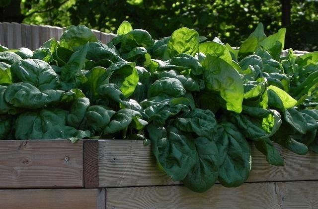 Gemüsegarten im Mai: Was kann man anbauen und was kann man ernten