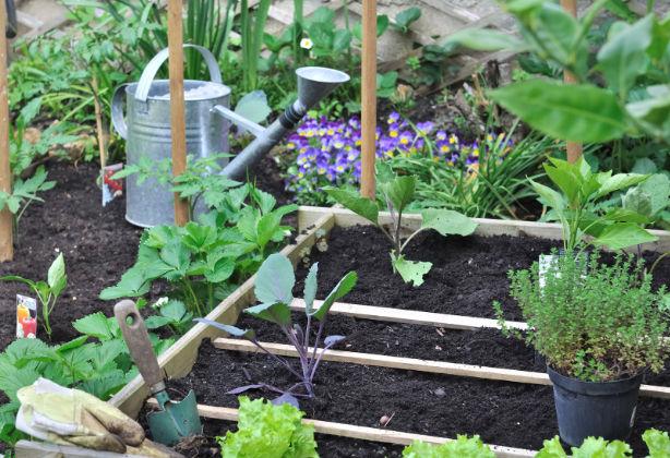 Der Gemüsegarten im Juni: Tipps
