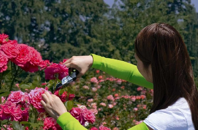 Wie man beim Gärtnern die Arme schützen kann