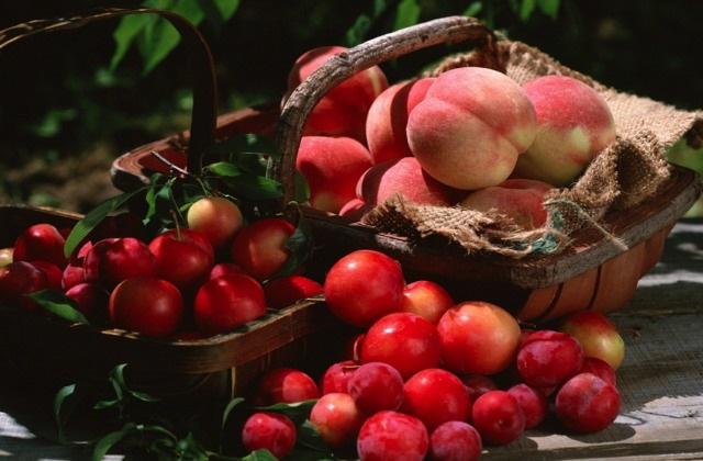 Juli ein goldener Monat für den Gemüsegarten; Ernte und neue Arbeiten