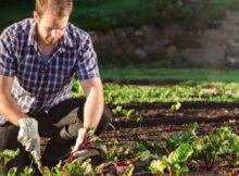 Arbeiten im Gemüsegarten im September