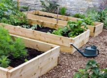Der Gemüsegarten im Oktober; säen und pflücken