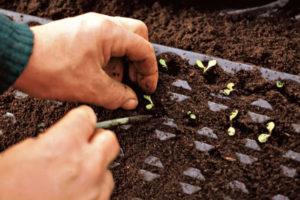 Der Gemüsegarten im November: Was Anbauen und was kann man Pflücken