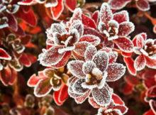 Was tun, damit die Pflanzen nicht erfrieren