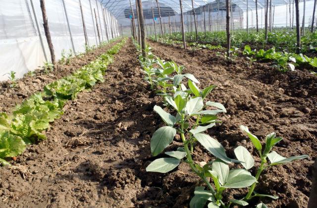 Der Gemüsegarten im Dezember; anbauen und ernten