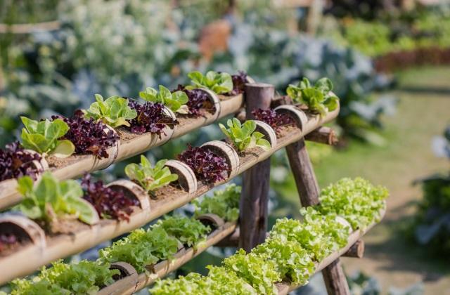 Der Gemüsegarten im Januar: nützliche Tipps zum Anbauen