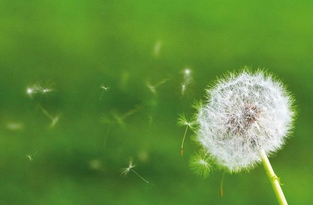Asthma und Bronchitis mit natürlichen Kräutern bekämpfen
