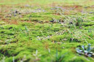 Wie beugt man die Moosbildung im Garten vor?